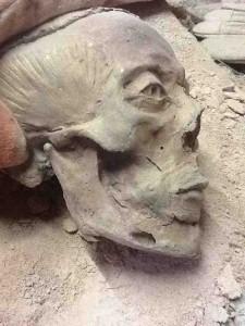 De schedel